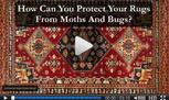 moth damage wool rugs