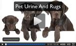 pet urine wool rugs and oriental